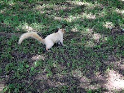 Canada_Mon..ny_squirrel.jpg